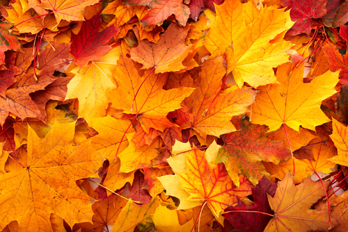 Essential Fall Maintenance Tasks